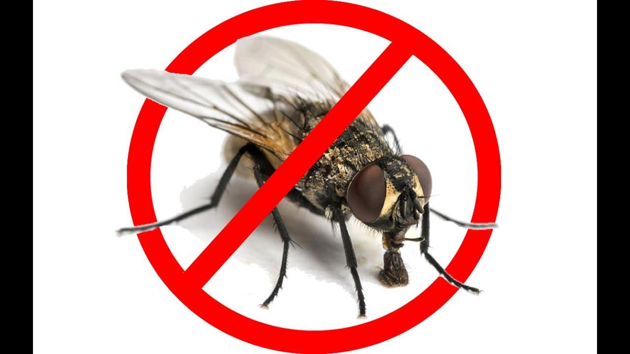 cómo eliminar las moscas de tu casa