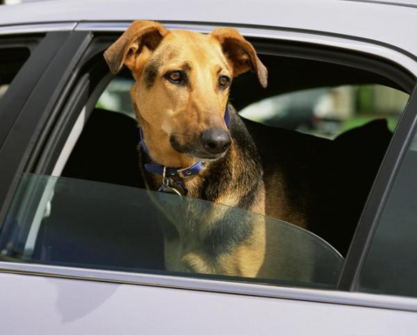 cómo quitar el olor a perro del coche