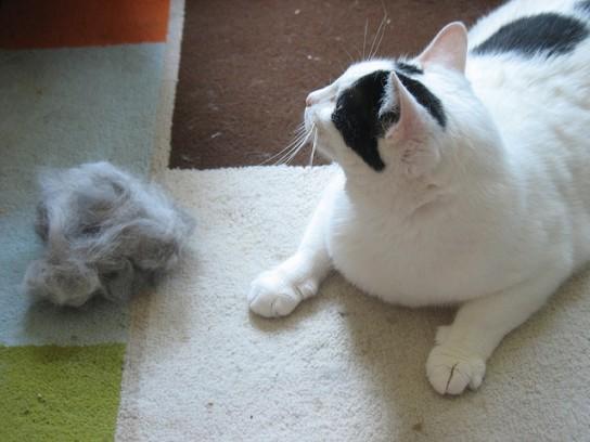 Cómo limpiar los pelos de gato