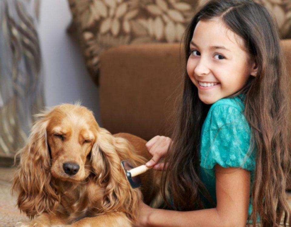Cómo limpiar los pelos de perro