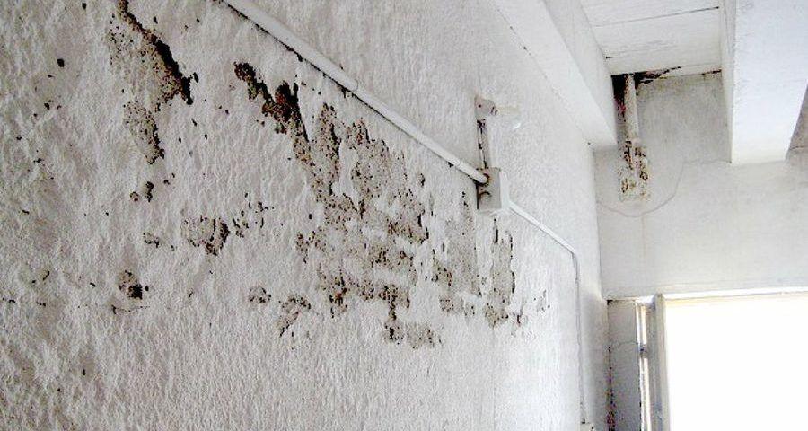 Cómo limpiar la humedad de las paredes