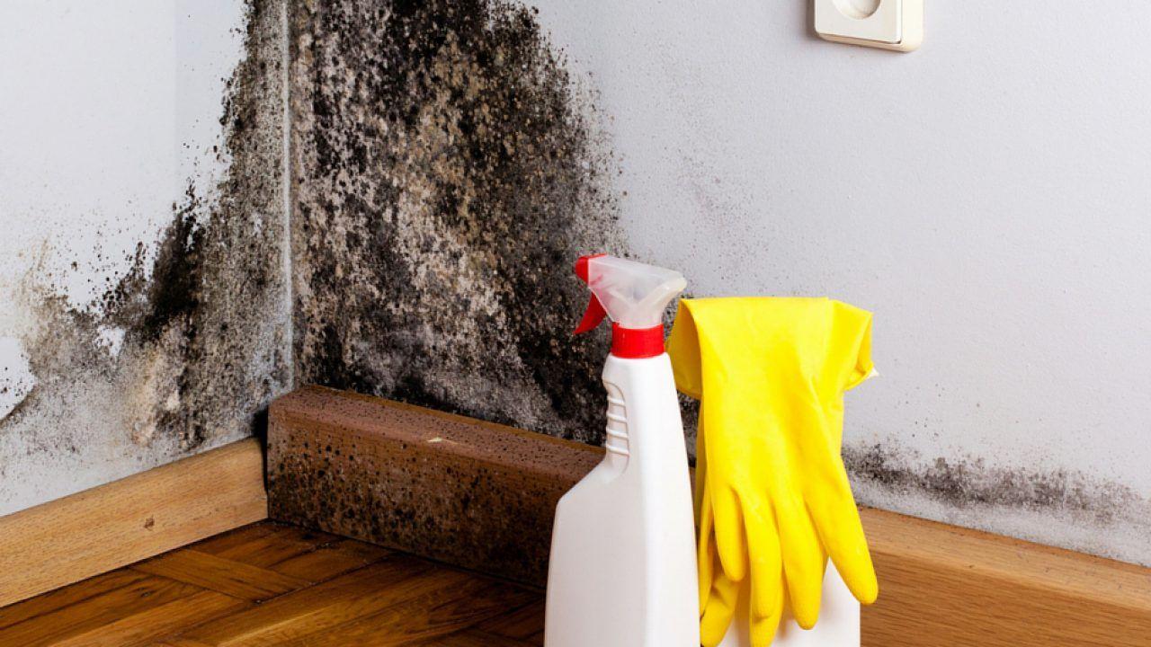Cómo limpiar el moho de la pared